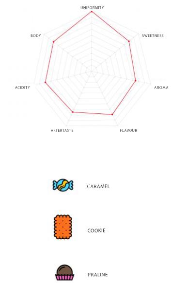 Infographic Zenit Coffee